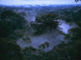 Aerial of Gunung Palung National Park, Borneo, Indonesia Photographic Print by Tim Laman
