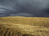 Storm Clouds and a Rainbow over a Manitoba Wheat Field Photographic Print by Medford Taylor