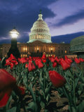 Twilight View of the U.S. Capitol with Red Tulips in the Foreground Photographic Print by Richard Nowitz