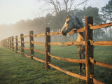 A Horse Watches the Mist Roll in over the Fields Fotoprint van Richard Nowitz