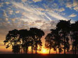 Sunset View with Silhouetted Trees, Muritz National Park, Germany Photographic Print by Norbert Rosing