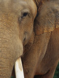 A Close View of the Face of an Elephant Photographic Print by Raul Touzon