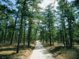 Sand Road Through the Pine Barrens, New Jersey Photographic Print by Skip Brown