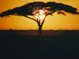 Sunset and Trees, Serengeti Plains, Tanzania Fotografisk tryk af Skip Brown