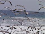 Seagulls Fly over Surf Fotografisk tryk af Raul Touzon