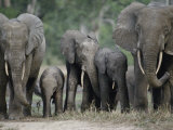 A Group of African Forest Elephants in a Clearing in the Forest Photographic Print by Michael Fay