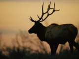 A Caribou is Silhouetted against a Cloudy Twilight Sky Photographic Print by Joel Sartore