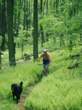 Mountain Biker and Dog on Single Track Trail Through Ferns Photographic Print by Skip Brown