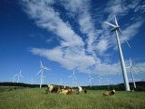 Cattle Graze Around Windmills Photographic Print by Steve Winter