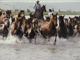 Chincoteague Cowboys Drive Their Wild Ponies to Auction Photographic Print by Medford Taylor
