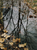 Autumn Leaves Floating in Israel Creek Photographic Print by Paul Zahl