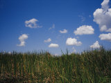 Puffy Clouds Fill a Blue Sky over Tall Grasses in the Everglades Photographic Print by Raul Touzon