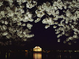 Japanese Cherry Blossoms Frame a Night View of the Jefferson Memorial Photographic Print by Kenneth Garrett