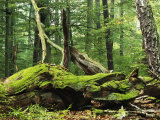Mosses Growing on Dead Tree, Muritz National Park, Germany Photographic Print by Norbert Rosing