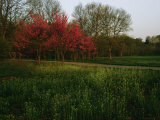 Spring View in Louisvilles System of Olmsted Parks and Parkways Photographic Print by Melissa Farlow