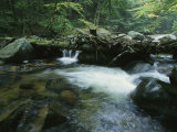 A Babbling Brook in the New Hampshire Woods Photographic Print by Heather Perry