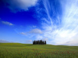 Poppies in a Wheatfield and Cypress Trees against a Huge Sky Photographic Print by Raul Touzon