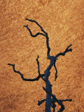 Tree Branch Silhouetted against Rock in Uluru National Park Photographic Print by Jason Edwards