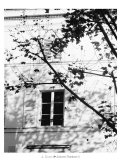 Autumn Shadows II Prints by J. Gomis