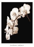 Danza di orchidee II Poster di John Rehner