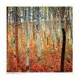Skog med bøketrær, ca.1903 Plakater av Gustav Klimt