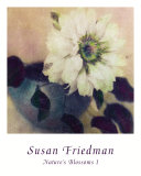Nature&#39;s Blossoms I Prints by Susan Friedman