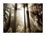 Morning Light Prints by Dennis Frates