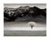 Solitary Tree Poster von Dennis Frates