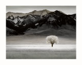 Solitary Tree Poster by Dennis Frates