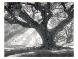 Andrew Oak, Afternoon Light Poster af William Guion