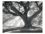 Andrew Oak, Afternoon Light Prints by William Guion