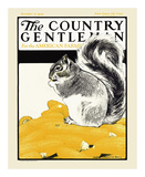 Squirrel with Corn, c.1922 Art by Charles Livingston Bull