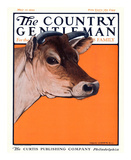 Red Cow, c.1923 Art by Charles Livingston Bull