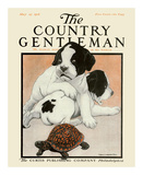 Puppies and the Turtle, c.1916 Prints by Charles Livingston Bull