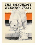 Polar Bears, c.1919 Prints by Charles Livingston Bull