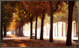 Champs-Elysees Framed Canvas Print by Bo Brannhage