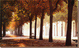 Champs-Elysees Stretched Canvas Print by Bo Brannhage