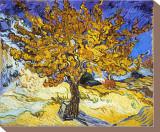 A Árvore de Amora, c.1889 Impressão em tela esticada por Vincent van Gogh