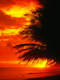 Palm Fronds Silhouetted by Sunset on the Coast, Corcovado National Park, Puntarenas, Costa Rica Photographic Print by Mark Newman