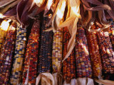 Detail of Drying Coloured Corn at Roadside Market Near Mitchell, Mitchell, USA Photographic Print by Rick Gerharter