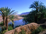 Date Palms in the Draa Valley, Draa Valley, Ouarzazate, Morocco Fotografisk tryk af John Elk III