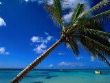 Sea View Beyond Palm Tree, La Romana, La Romana, Dominican Republic Photographic Print by Greg Johnston