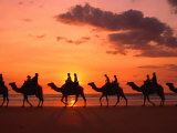 Camel Trek at Sunset along the Beach., Broome, Australia Fotografie-Druck von John Banagan