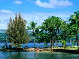 Coconut Island, a Small Island in Hilo Bay, Hawaii, USA Photographic Print by Ann Cecil
