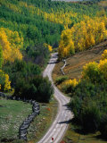 Road Leading Through Autumn Foliage in San Juan Mountains Near Telluride, Telluride, USA Photographic Print by Woods Wheatcroft