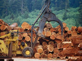 Logged Trees Being Moved at Wood Mill on Border of Redwood National Park, USA Photographic Print by Woods Wheatcroft