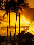 Palm Trees Silhouetted at Sunrise, Kauai, Hawaii, USA Photographic Print by Shannon Nace