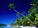 Palm Trees on Beach, Cook Islands Fotografisk tryk af Peter Hendrie