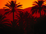 Palm Trees Silhouetted at Sunset, Palma De Mallorca, Spain Fotodruck von Damien Simonis