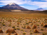 Altiplano Mountains and Scrub, Southwest, Bolivia Photographic Print by Woods Wheatcroft